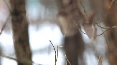 ウィンターパークで単独で葉に焦点を当てる — ストックビデオ