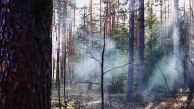Rook van vuur in voorjaar bos bij zonsondergang — Stockvideo