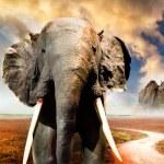Elephant — Stock Photo #27507187