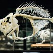 Stock Photo: Fish skeleton