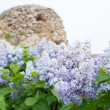 Violet flowers of lilac — Stock Photo