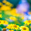 Stock Photo: Yellow flowers