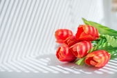 Bouquet of red tulips — Stock Photo