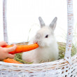 Rabbit with carrot — Stock Photo #30495927