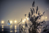 Reeds on the lake — Stock Photo