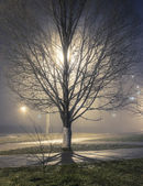 Tree in a park — Stock Photo