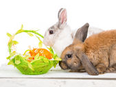 Rabbits and easter basket — ストック写真