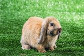 кролик на траве — Стоковое фото