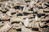Pile of stacked pine logs showing ends — Stock Photo