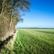 Stock Photo: English field bordering on woodland