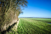 English field bordering on woodland — Stock Photo