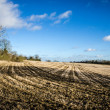 Stock Photo: Farm field and hedge row in January