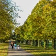 Three people walking along an avenue of lime trees — Stock Photo