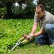 Trimming Plants Outside — Stock Photo #4638144