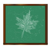 Maple leaf on a blackboard vector — Stok Vektör