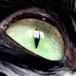 Cat's eye — Stock Photo