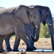 Stock Photo: Elephants in EtoshNational Park