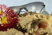 Sunglasses in the sand of the beach — Foto Stock