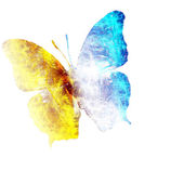 Butterfly on white background — Stock Photo