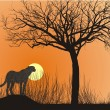 Cheetah and sunset - Stock Vector