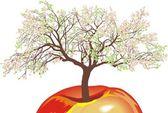 Flowering apple tree in spring — Stock Vector