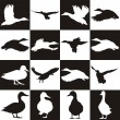 Black and white background with Mallards — Stock Vector