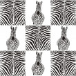 Stock Vector: Pattern zebras for textiles