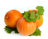 Yellow pumpkins vegetables with green leaves isolated — 图库照片