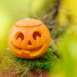Halloween scary pumpkin in autumn forest — Stock Photo