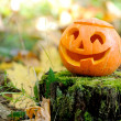 Halloween scary pumpkin in autumn forest — Stock Photo #13514436