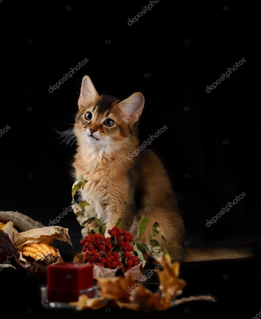 可爱的两只猫咪图片l
