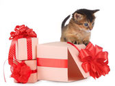 Cute somali kitten in a present box — Stock Photo