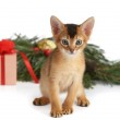 Cute kitten with christmas tree and gift box — Stock Photo #36850725
