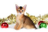 Cute kitten with christmas balls — ストック写真