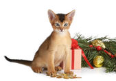 Cute kitten with christmas tree and gift box — Stock Photo