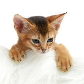 Cute kitten isolated on white background — Stock Photo