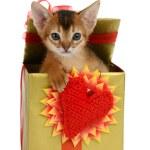 Valentine theme kitten in a present box — Stock Photo #38548561