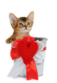 Valentine theme kitten sitting in a silver bucket — Stock Photo