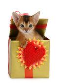 Valentine theme kitten in a present box — Stock Photo