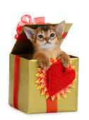 Valentine theme kitten in a present box — Stock Photo
