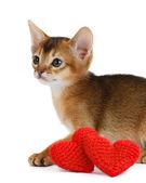 Gatinho de tema dos namorados com coração vermelho isolado — Fotografia Stock