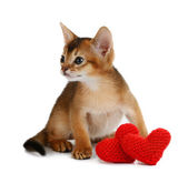 Valentine theme kitten with red heart isolated — Stock Photo