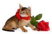Valentine theme kitten with red heart and rose — Stock Photo