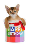 Kitten sitting in a Happy Birthday bucket — Stockfoto