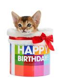 Kitten sitting in a Happy Birthday bucket — Stock Photo