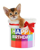 Kitten sitting in a Happy Birthday bucket — Stock Photo