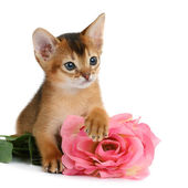 Valentine theme kitten with pink rose — Stock Photo