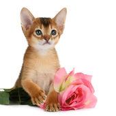 валентина тема котенок с розовой розы — Стоковое фото