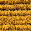 Wall of yellow ripe corn collected in autumn — Stock Photo #39378641