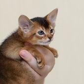 Portrait of a cute kitten in female hands — Stock Photo